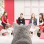「乃木坂46×アイペット損保」WEB CM第2弾「女子会」篇