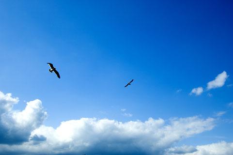 乃木坂46、15年7月20日(月)のメディア情報「しくじり先生」「おに魂」「NiPPoN RockS」「NOGIBINGO!5」ほか
