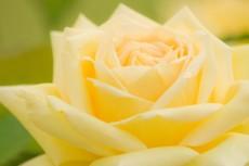 乃木坂46、16年3月17日(木)のメディア情報「Tokyo Girls' Update」「恋する文学(終)」「LARME」ほか